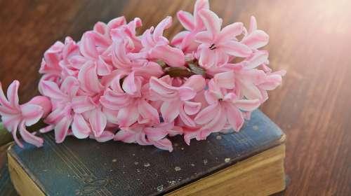 hyacinth-782328_960_720